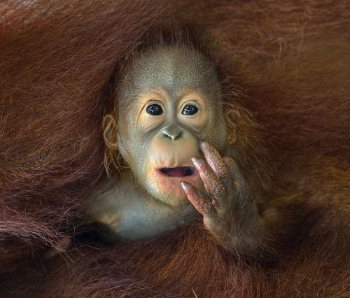 The 2014 Sony World Photography Awards