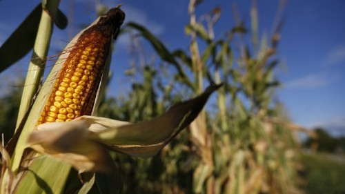 The EPA Quietly Approved Monsanto's New Genetic-Engineering Technology