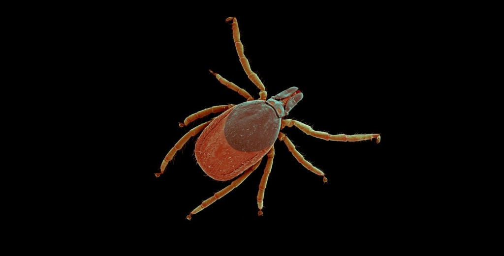 What Tick Saliva Does to the Human Body