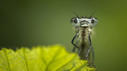 Is the Insect Apocalypse Really Upon Us?