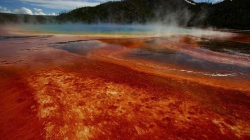 A Break in the Search for the Origin of Complex Life