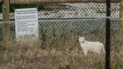 A Single Male Cat's Reign of Terror