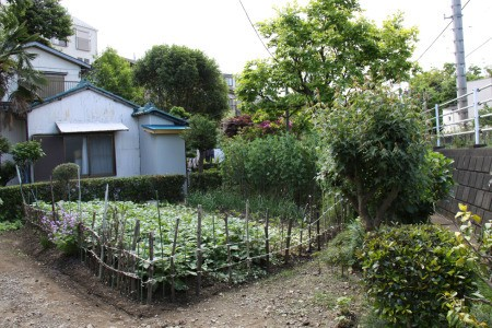 For Urban Farming Wisdom, Look to Japan
