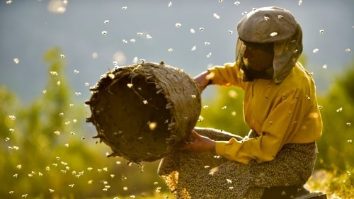 Honeyland: A Rare Nature Documentary That's Deeply Personal