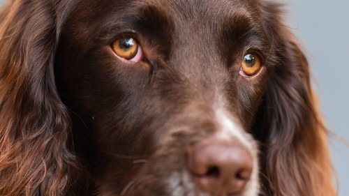 Dogs' Eyes Have Changed Since Humans Befriended Them