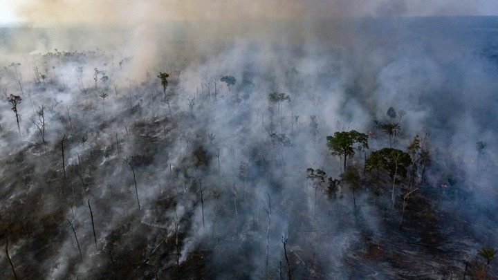 The Amazon Is Not Earth's Lungs