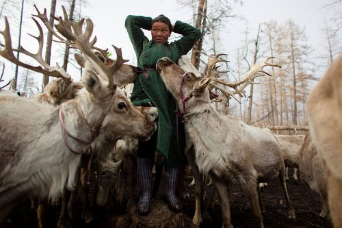 A Changing Way of Life for Mongolia's Dukha Reindeer Herders