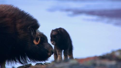 Does Radio-Collaring Animals Harm Them?