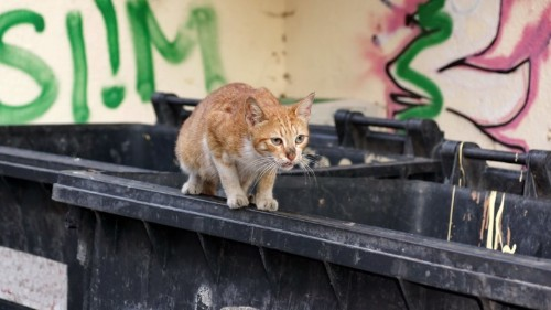 Cats Are No Match for New York City's Rats