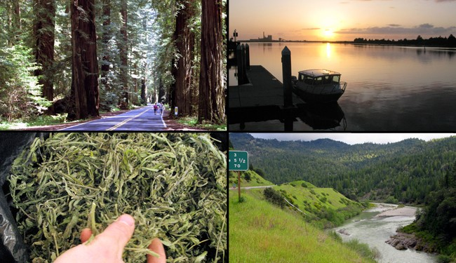 California's New Pot Growers: Not at All Earth-Friendly