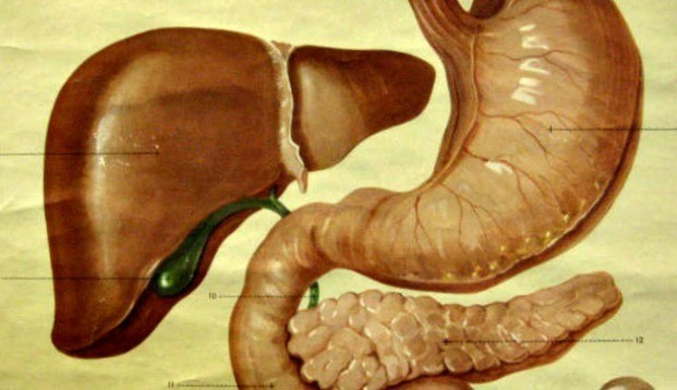 In Autism, the Importance of the Gut
