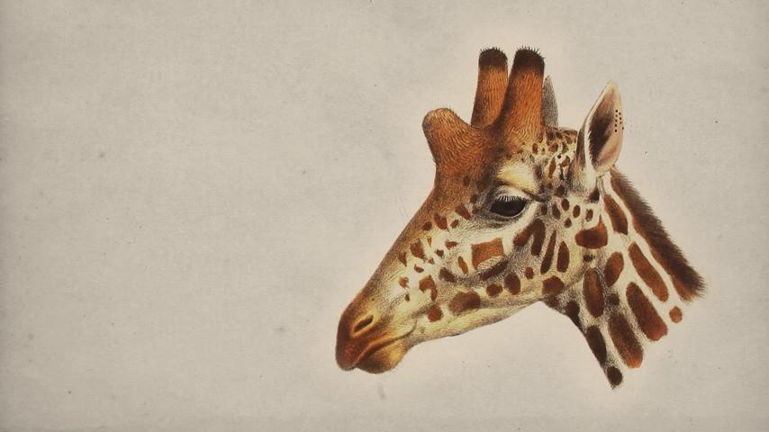 The Great Giraffe Illusion