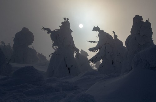 Juhyo: The Snow Monsters on Japan's Mount Zao
