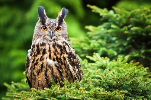 'Horror Owl' Terrorizes Residents of Dutch Town