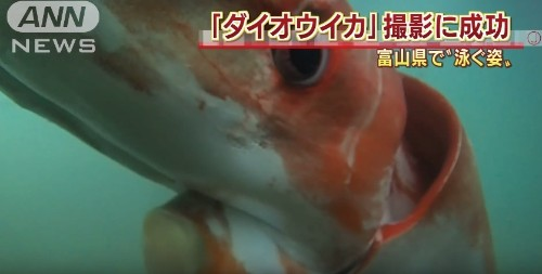 Japanese Fisherman Captures 'Very Rare' Sea Creature on Camera: 'My Curiosity Was Bigger Than Fear'