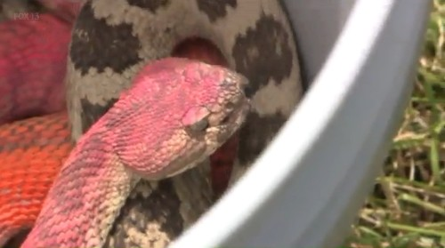 Wildlife Rescuer Speaks Out Against 'Really Childish' Act Committed Against Rattlesnake