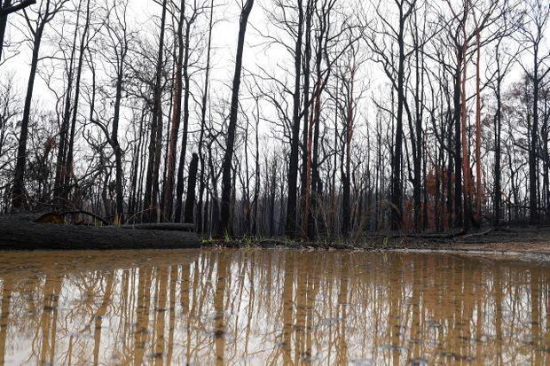 Australia's rainy respite from bushfires soon ending, meteorologists warn