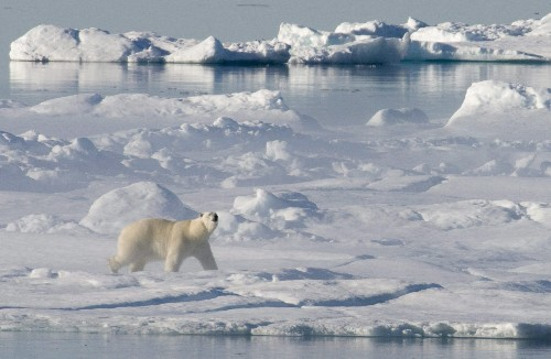 Federal government releases long-awaited Arctic policy