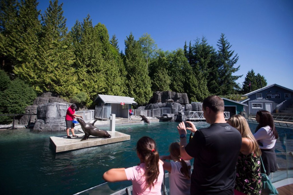 Vancouver Aquarium to close indefinitely