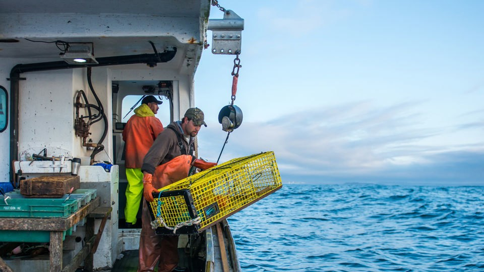 Cheap at sea, pricey on the plate: The voodoo of lobster economics