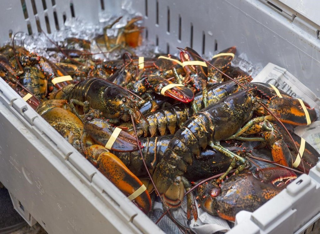 Nova Scotia restaurants boycott lobster in support of Mi'kmaq self-regulated fishery