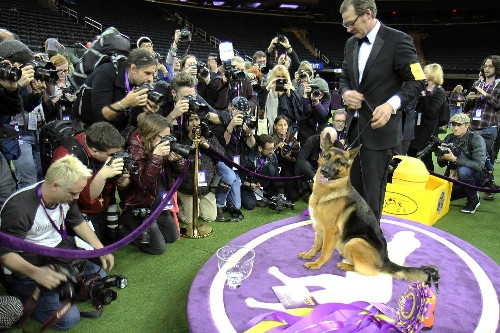 Wandering the Westminster Dog Show