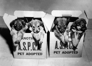 See Vintage Photos of Cute Animals from the ASPCA Archives