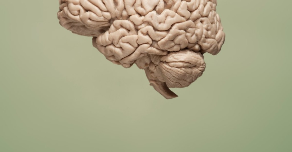Brain Now cover image