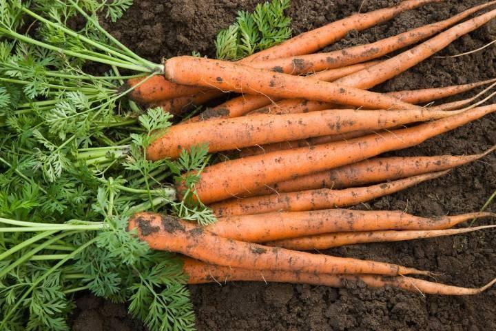 10 Veggies Anyone Can Grow On Their Own