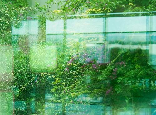 How We Ruined Mindfulness