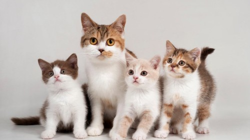 Cats Care About People More Than Food, New Study Finds