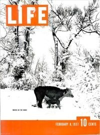 26 of LIFE's Best Animal Covers