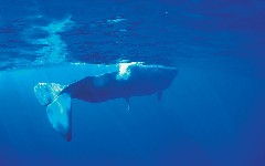 Discover sperm whales