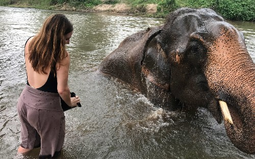 Dream of seeing elephants up close? Here's how to do it ethically