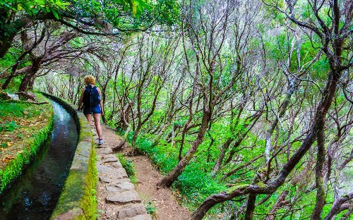 The Madeira Islands have hiking, biking, lush topography, and — of course — great wine