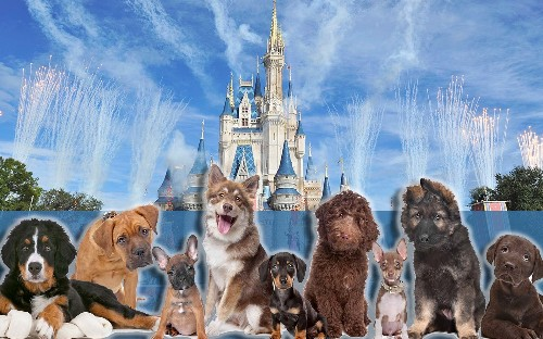 Disney World hotels are going to allow dogs for the first time ever
