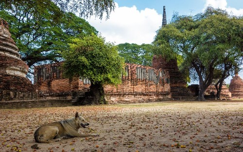 How a rabies scare changed the way I want to travel