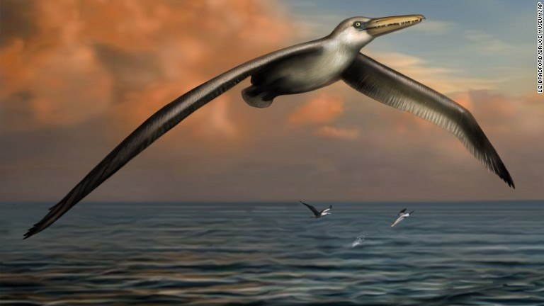 Scientists ID what may be the biggest bird