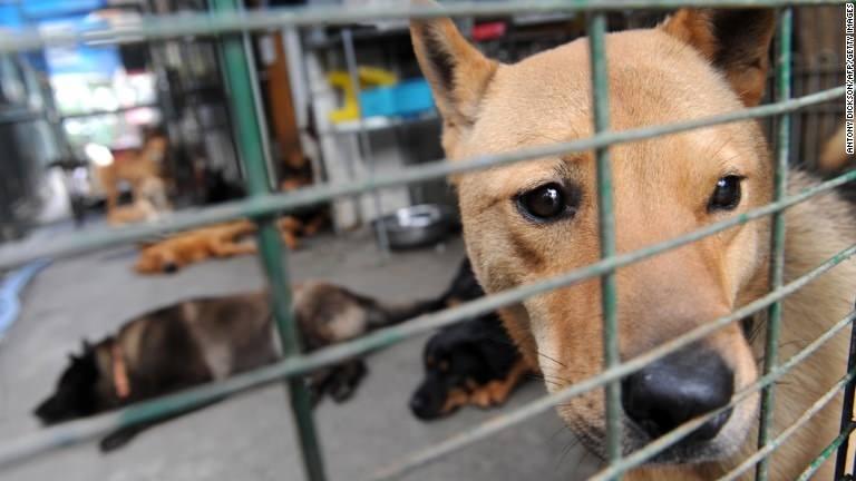 Chinese City Kills 5000 dogs :( - Magazine cover