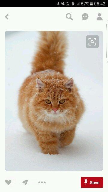 Avatar - Charlie Cat