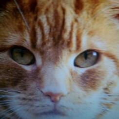 Avatar - The cat