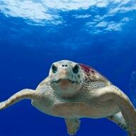 Avatar - Turtle40