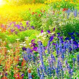 Gardening Sun - cover