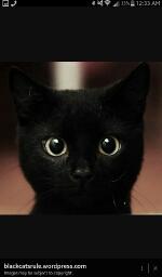 Avatar - Black Cats