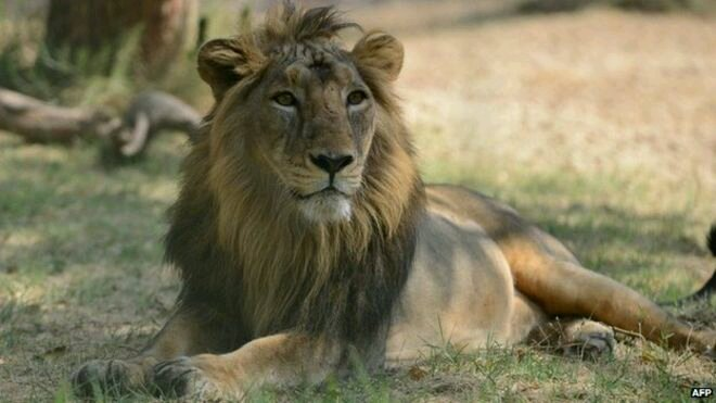 Avatar - Roaring Lion