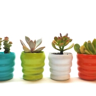 Avatar - 2craftycougs Succulents