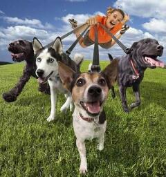 Avatar - Doggy-a-Go-Go! Professional Dog & Animal Care