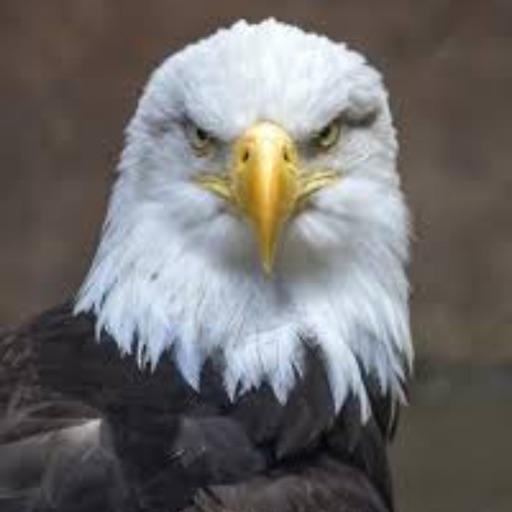 Eagle - cover