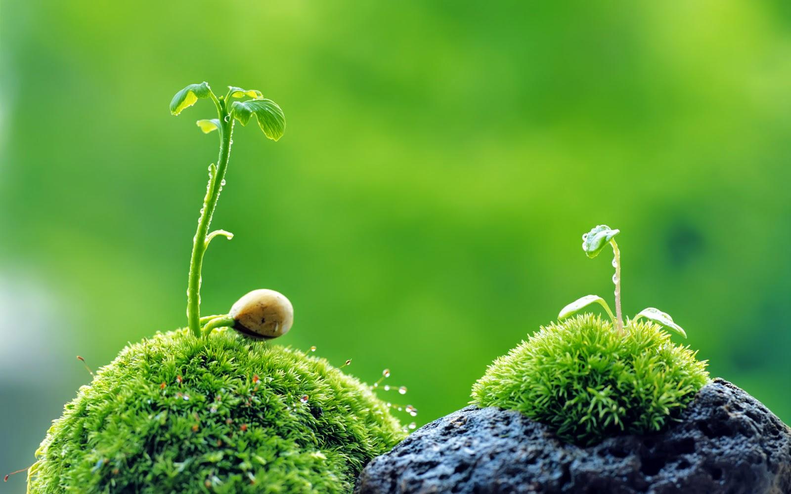 Avatar - Natural Wellness Therapies