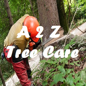 Avatar - A to Z Tree Care